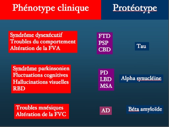phenotypecliniqueproteotype.jpg